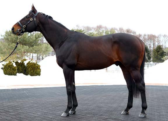 Empire Maker, stallion of JBBA Shizunai, Japan, 24.Feb.2013