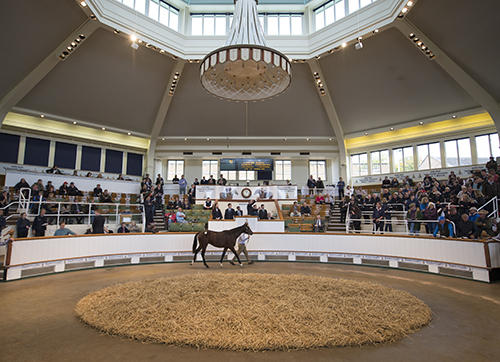 Lot 43, a bay colt by Galileo out of Alluring Park sells to John Magnier for 1.25m Guineas at book 1 of the Tattersalls yearling sales Newmarket 6.10.15 Pic: Edward Whitaker