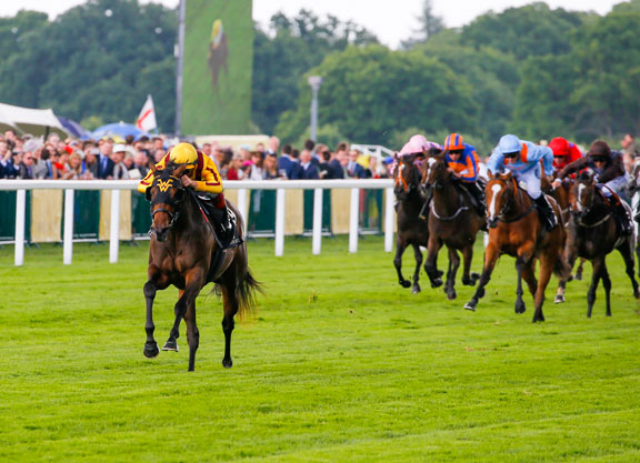 Image result for Lady Aurelia horse