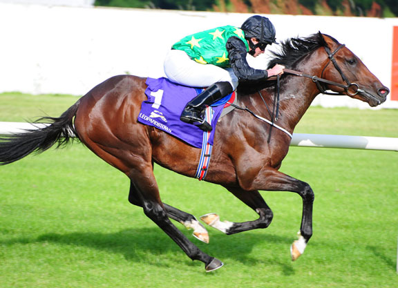 Image result for douglas macarthur horse curragh