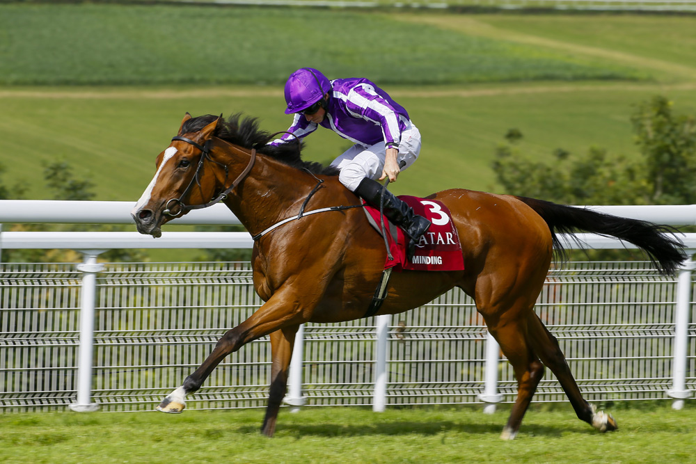 Image result for minding nassau stakes 2016