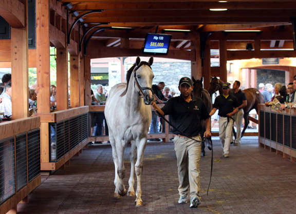 Hip 140, 2016 Fasig-Tipton Saratoga Selected Yearling Sale