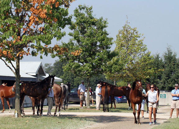 Keeneland_September_2012_scenic_keenelandsales17a_PRINT_photo_by_Z
