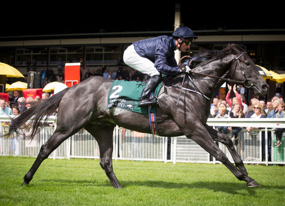 Image result for caravaggio pheonix stakes