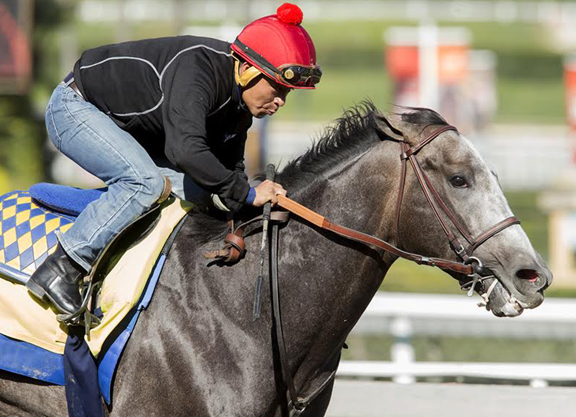Arrogate Gets His Workout Chrome Jogs In Florida