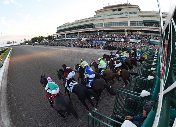 Pegasus Anchors Rich Gulfstream Stakes Schedule