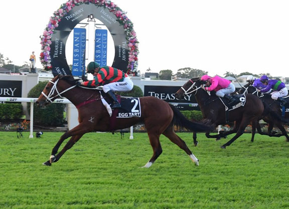 Egg Tart serves up a treat in Queensland Oaks for Waller