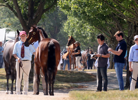Keeneland Catalogs 4,272 Yearlings for September Sale