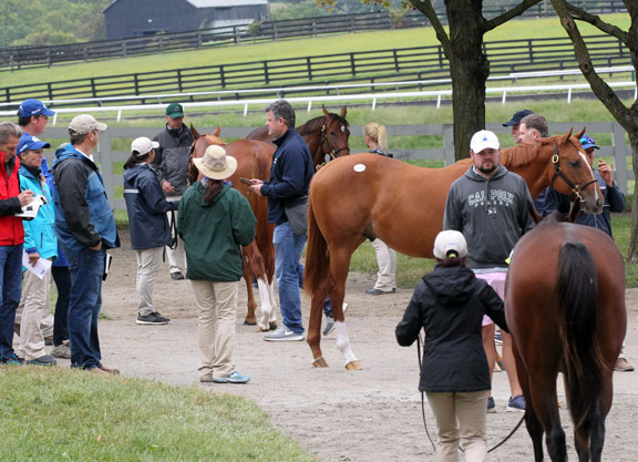 Buzz Continues at Keeneland as Book 2 Concludes