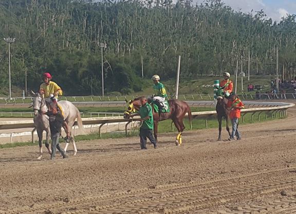 Puerto Rico racing