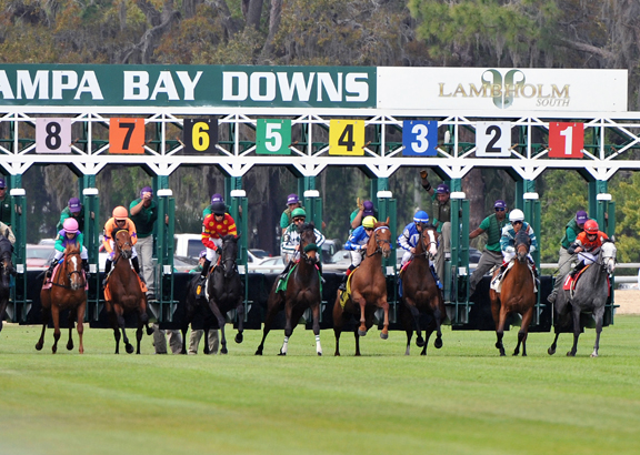 Tampa Preview Day Tickets Available