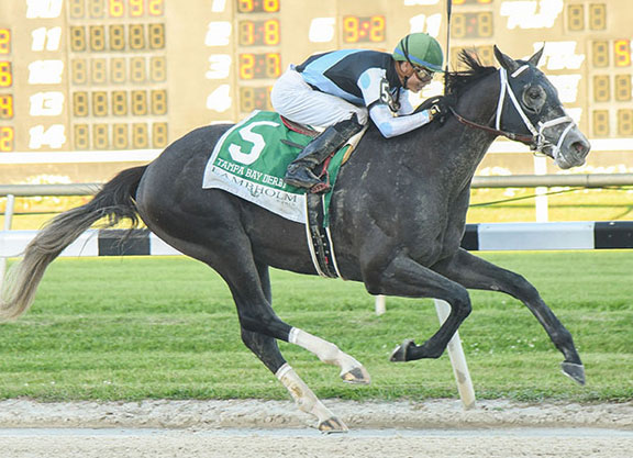 Tampa Bay Releases Richest-Ever Stakes Schedule