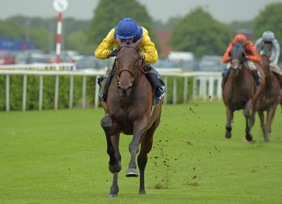 Marmelo Retired to Haras Du Grand Courgeon