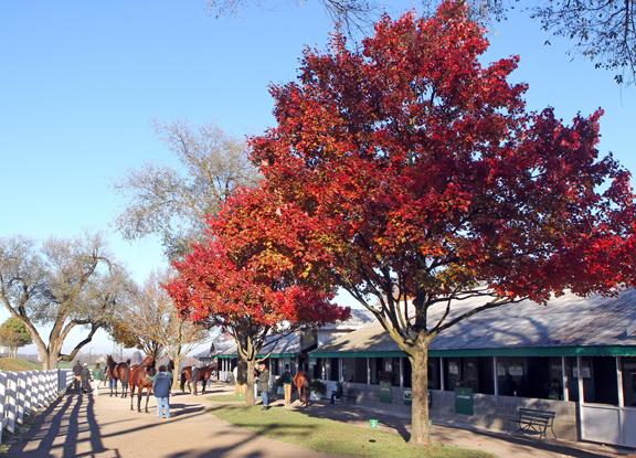 Keeneland November Sale Starts Monday