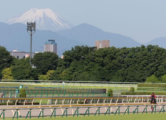 Derby Dreaming Begins In Japan