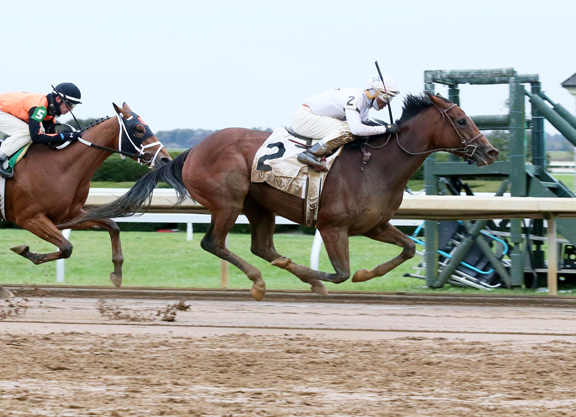 Distorted Humor Filly Gets Up in Time for Wayward Lass Score