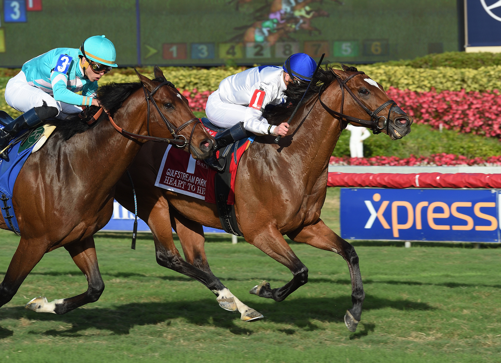 Heart to Heart Gets His Grade I at Gulfstream
