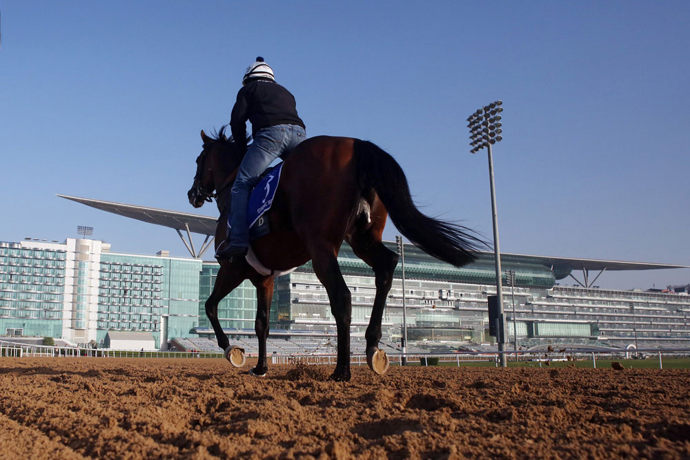 'Model' Horse Looms Large in Godolphin Mile