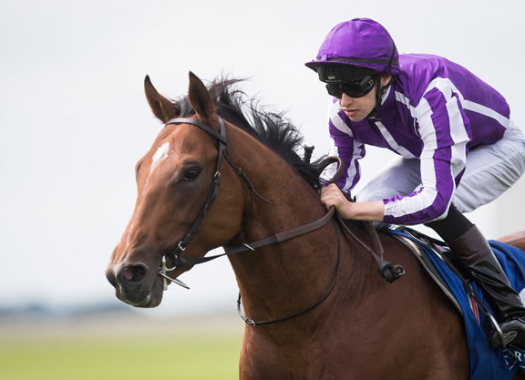 Field of 12 for Derby at Epsom