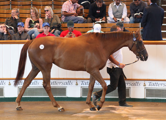 Dubawi Filly Leads Way At Tattersalls