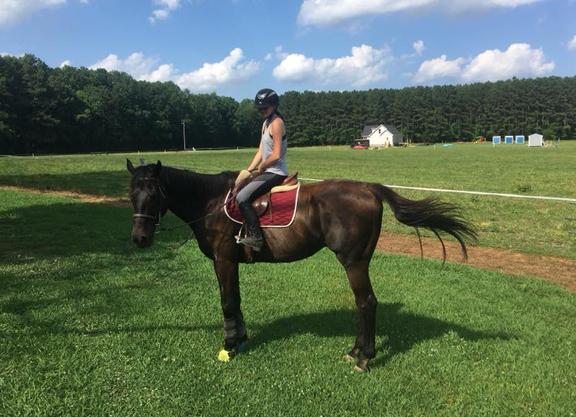 Ten Years, 2,392 Horses Later, Parx Rescue Program