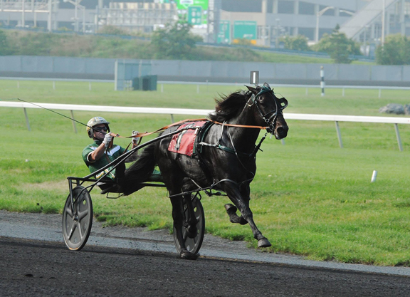 LazarusWEB taylor made's star pacer yes, pacer makes debut friday tdn
