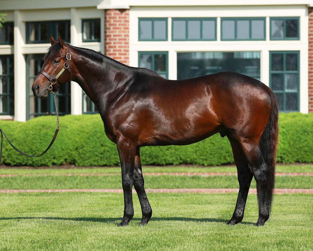 Connect Filly Graduates at Gulfstream