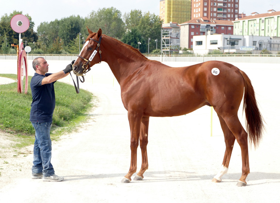 Dawn Approach Colt On Top In Milan