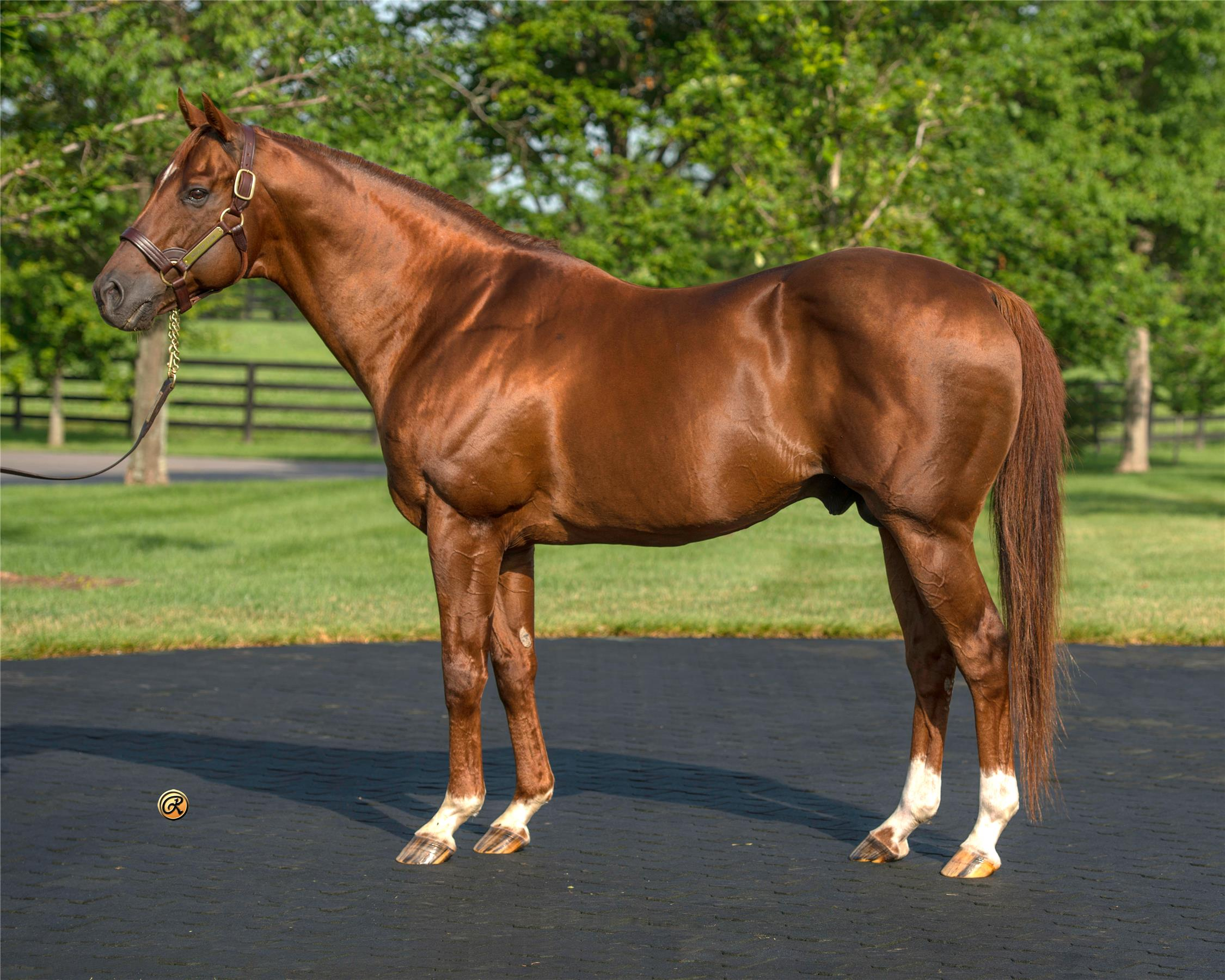 Stallion Details - TDN | Thoroughbred Daily News | Horse