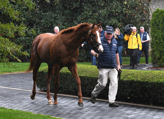 Justify to Stand for $150,000 in 2019