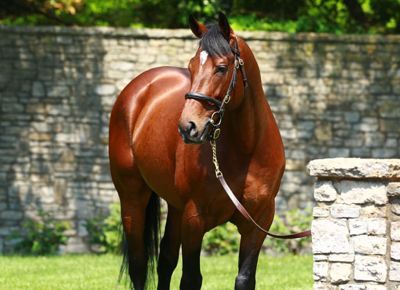 More Classic Prospects For Expatriated Sire