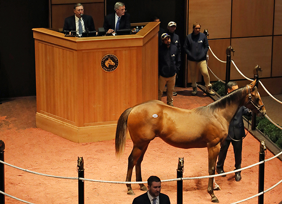 Solid Opener to Fasig October Sale