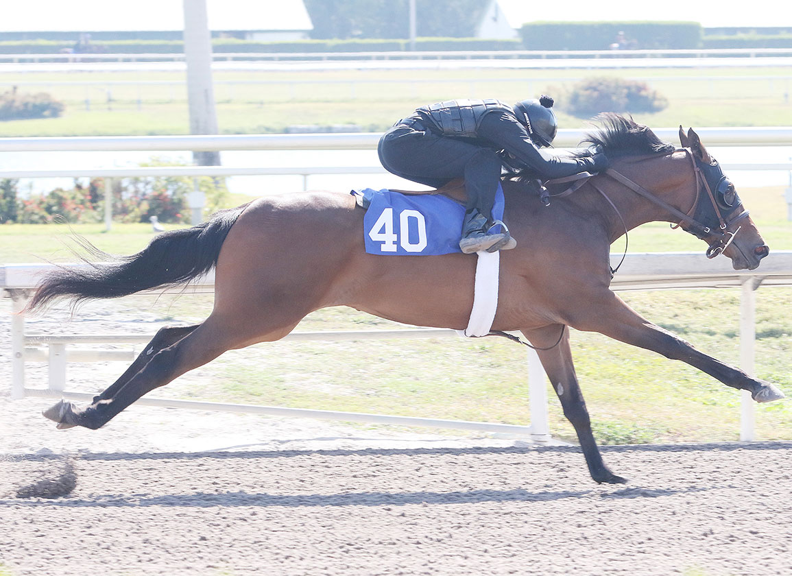 Japan Road to the Kentucky Derby Kicks Off at Tokyo