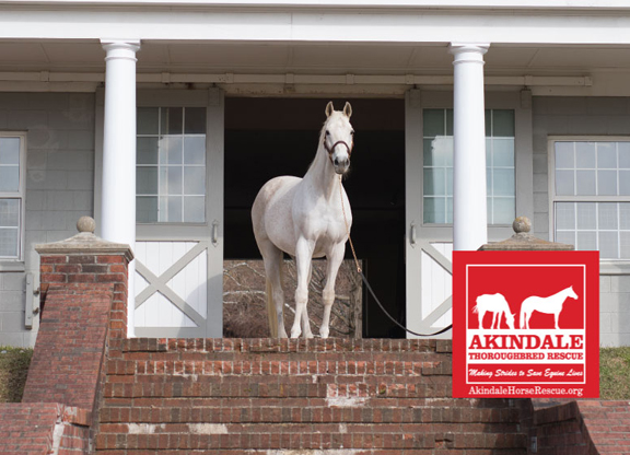Akindale Thoroughbred Rescue Makes a Major Move