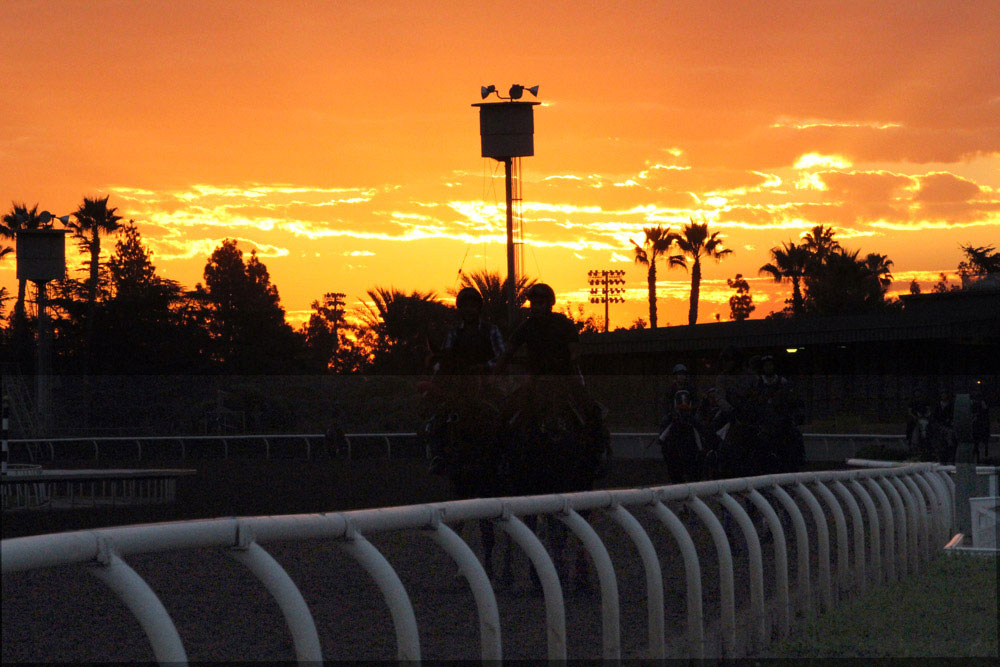 Santa Anita Cancels Racing Indefinitely After 21st Horse Dies at Track