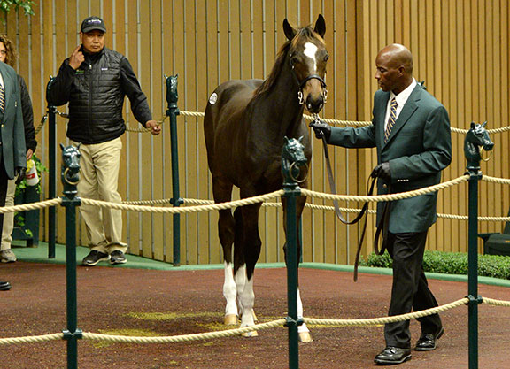 Insights: Well-Related, Expensive Tapit Colt Debuts in Big Easy