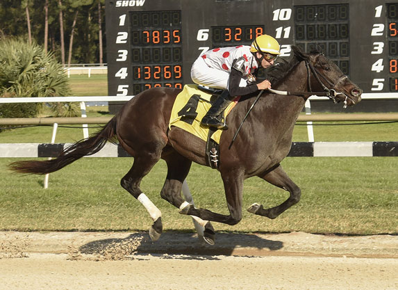 Win Win Win Gets His Two-Turn Shot in Tampa Bay Derby