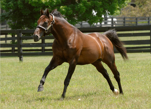 Taking Stock: Candy Ride and His North American Success