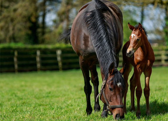 Treve Foals Siyouni Filly