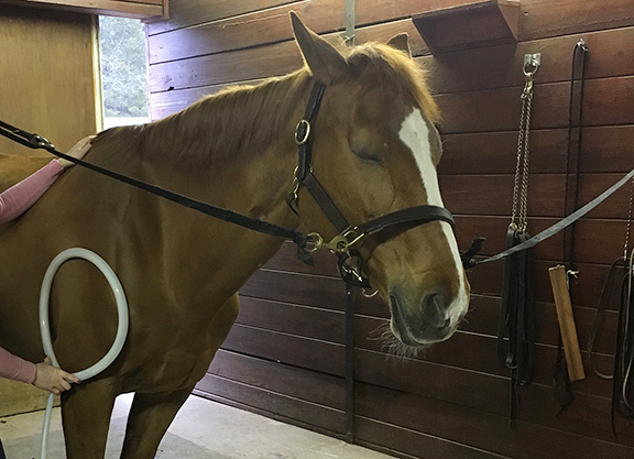 Equine Therapy in Cross-Hairs of New York's Strict