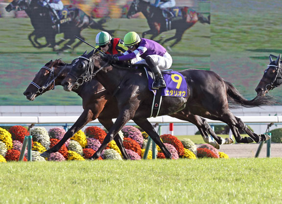 Tenno sho betting lines lee sacker futuresbetting