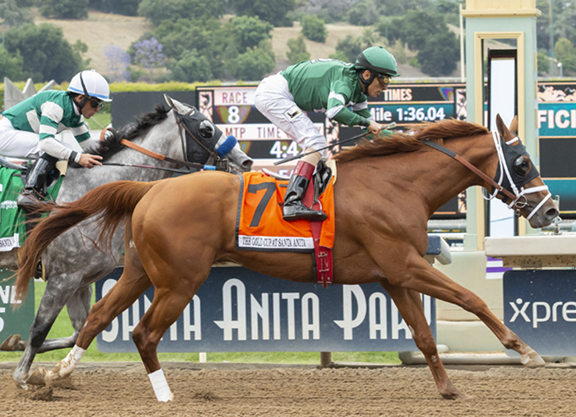 Vino Rosso Flows in Gold Cup