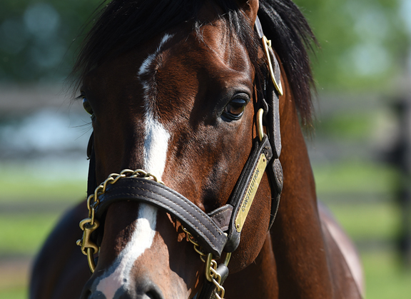Constitution Juvenile Graduates First Out at Churchill