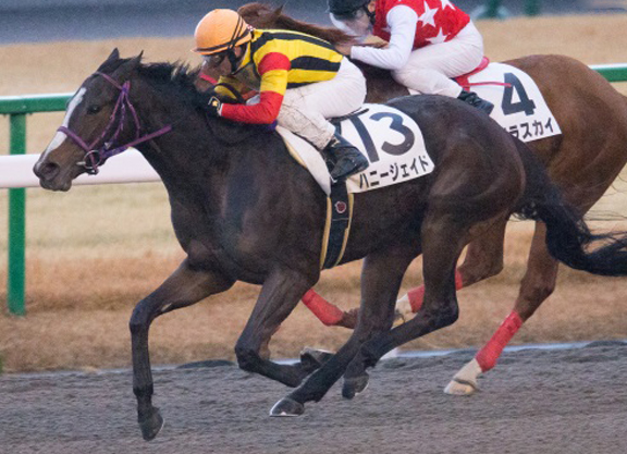 Notable US-Bred Runners in Japan: July 13 & 14, 2019