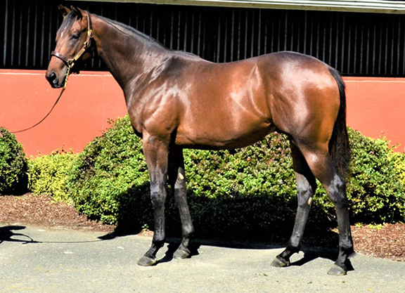 Midshipman Colt Tops WTBOA Sale