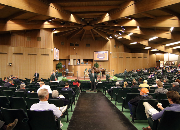 Quality Road Mare Tops KEENOV
