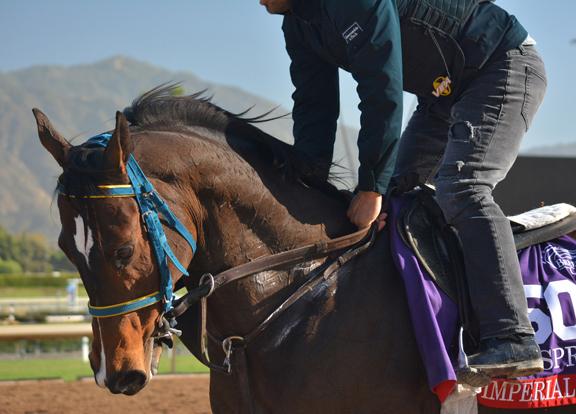 Wednesday's Trackside Breeders' Cup Report