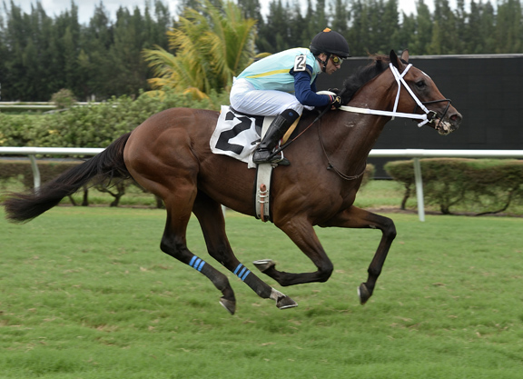 Biancone a Debut Winner with Sole Volante