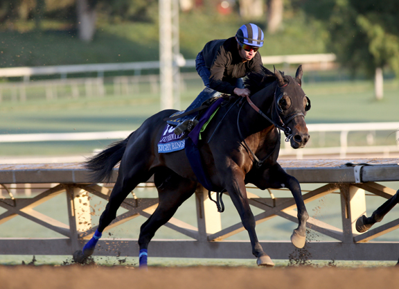 Baffert Runners Tune Up for Cup Dates