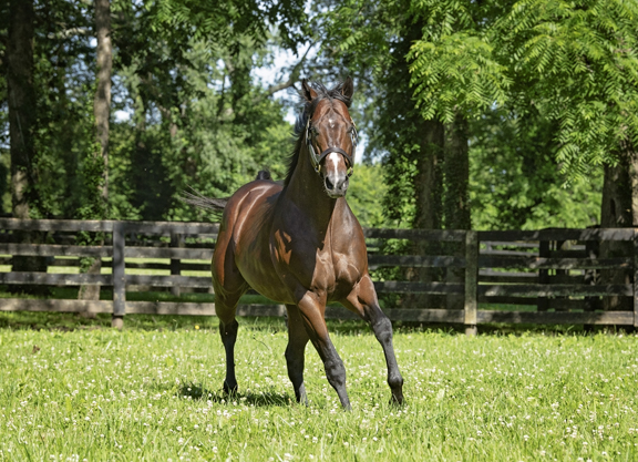 Champion Beholder to Bolt d'Oro in 2020